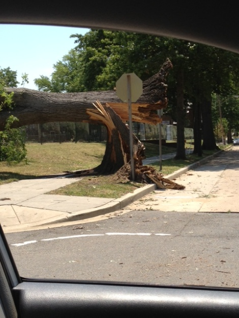 Broken Tree on 3rd St. and Ingraham St. NW